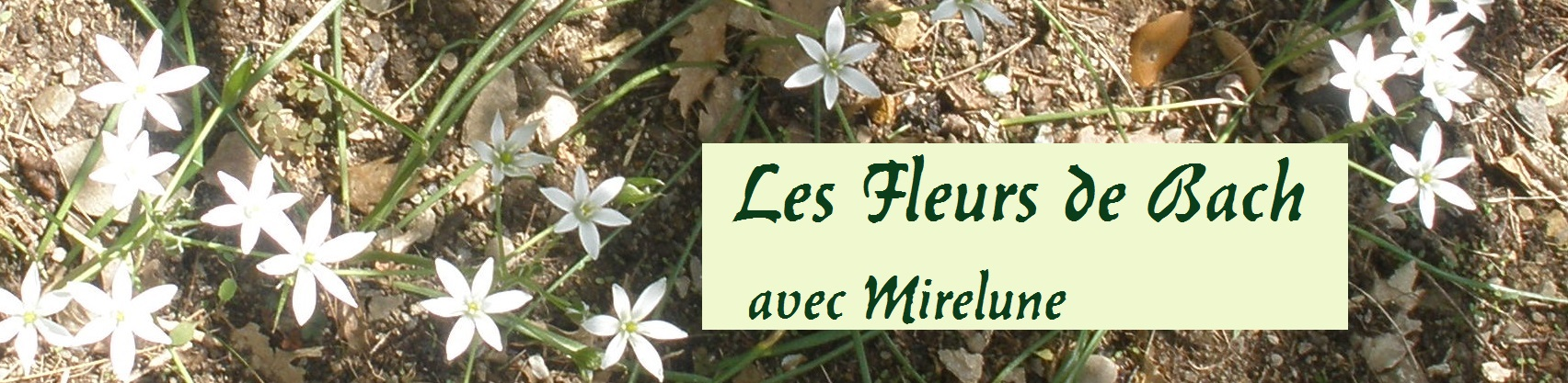 Les fleurs de Bach avec Mirelune
